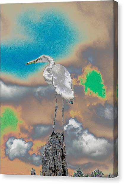 Egrit Canvas Print by Perry Conley