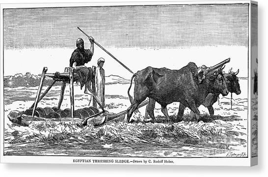 Sleds Canvas Print - Egypt: Threshing Sledge by Granger
