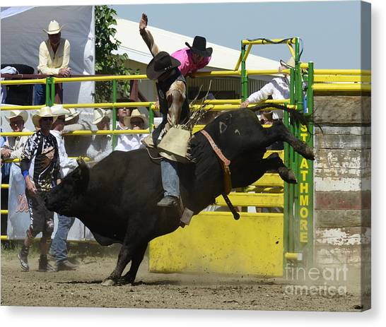Bull Riding Canvas Print - Rodeo Eight Seconds by Bob Christopher
