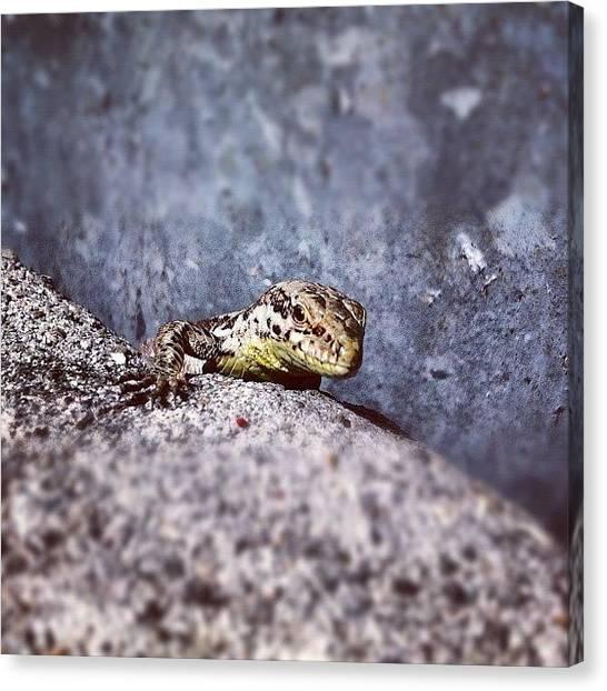 Reptiles Canvas Print - Eine Richtige Frechdechse! by Stoeps Meyer