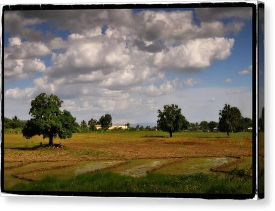 Mango Tree Canvas Print - El Campo De Los Mangos by Giovanni Savino