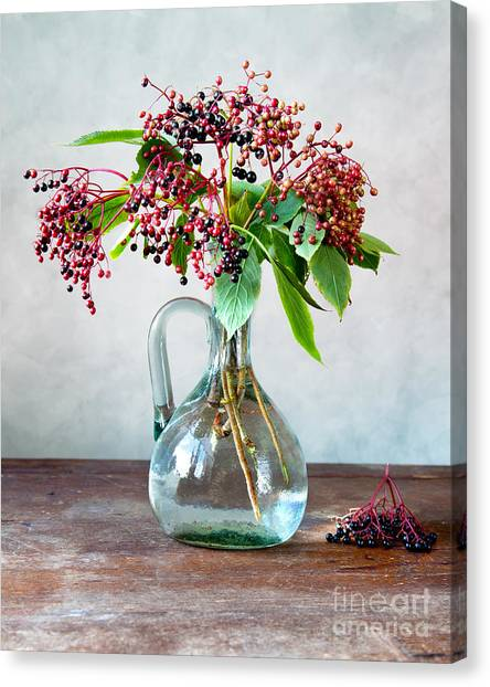Thanksgiving Canvas Print - Elderberries 06 by Nailia Schwarz