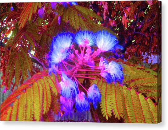 Electric Mimosa Canvas Print by Juliana  Blessington