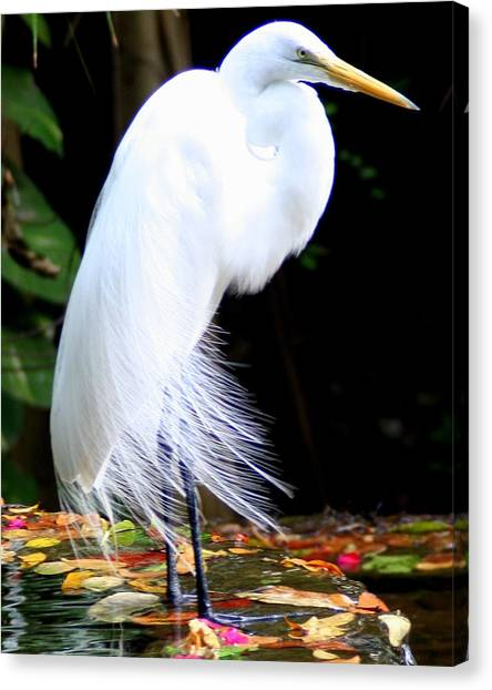 Elegant Egret At Water's Edge Canvas Print