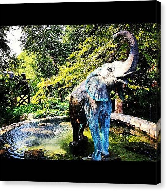 Saints Canvas Print - Elephant Bathing At St. Louis Zoo by Rex Pennington