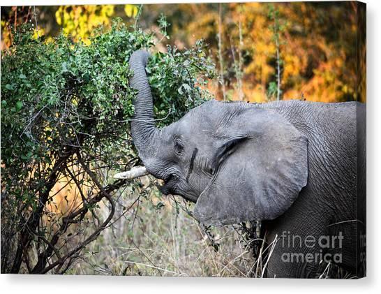 Elephant Detail Canvas Print