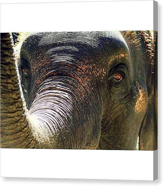 Head Canvas Print - Elephant Eye..#travel #thailand by A Rey