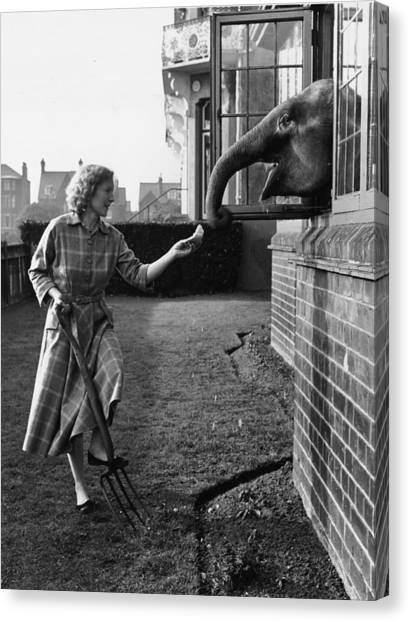 Elephant In The House Canvas Print by John Drysdale
