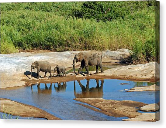 Elephant Reflections And The Sand River Canvas Print