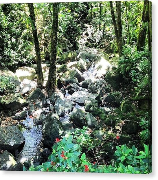 Rainforests Canvas Print - #elyunque #nationalforest #rainforest by Kyle Kazoo