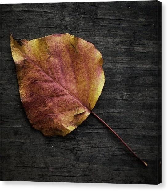 Autumn Leaves Canvas Print - Embracing Change by Ivan Vega