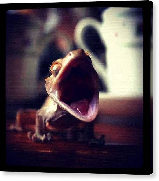 Lizards Canvas Print - Emily Took This. #crested #crestie by Kara Woodson