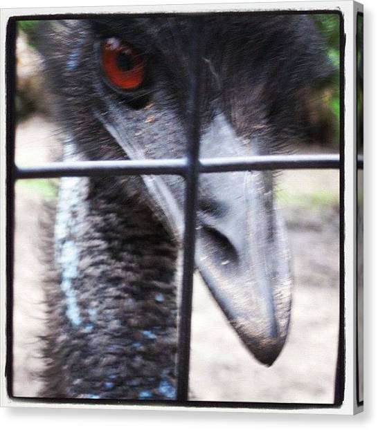 Large Birds Canvas Print - #emu #brevard #zoo #florida #staticage by Michael Hughes