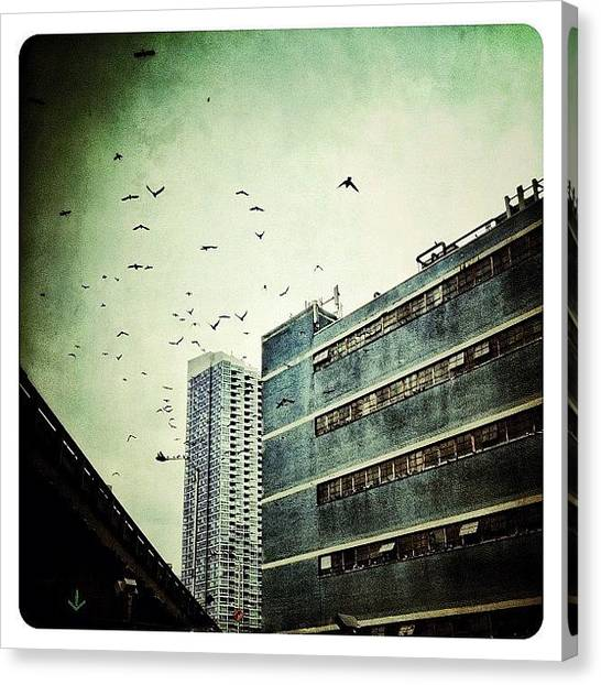 Birds Canvas Print - En Route by Natasha Marco