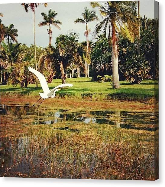 Miami Canvas Print - En Vuelo by Joel Lopez