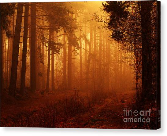 Enchanted Forest Canvas Print by Clare Scott
