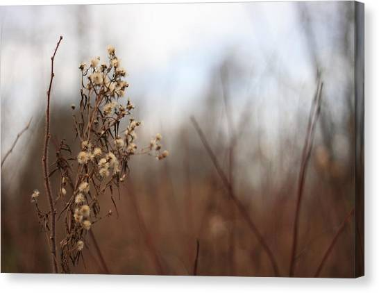 End Of Autumn Canvas Print by Brady D Hebert