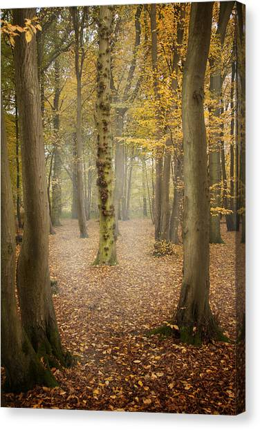 English Forest In Autumn Canvas Print