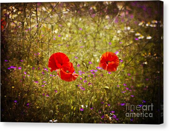 English Summer Meadow. Canvas Print