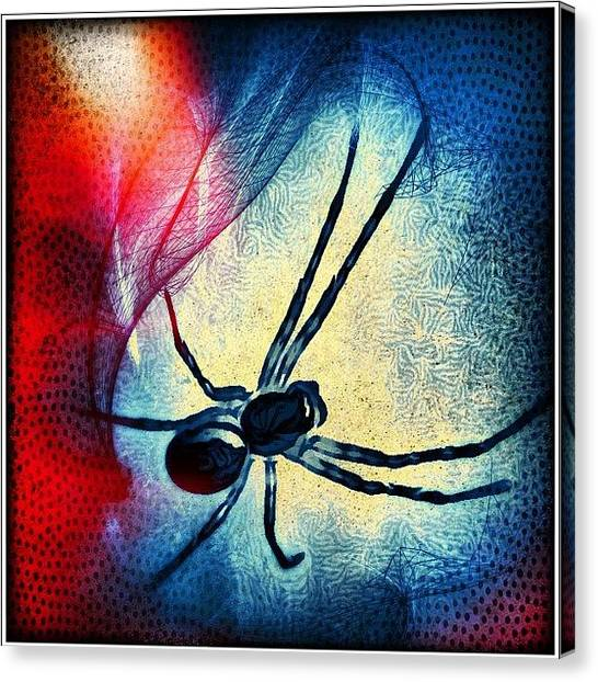 Spider Web Canvas Print - Enjoyed My Trip To The Cinema by Robert Campbell