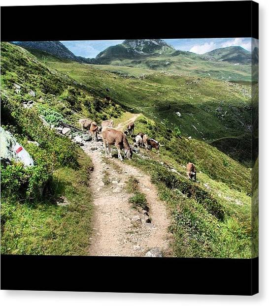 Swiss Canvas Print - Enjoying Some Lunch On The Swiss Alps!!! by Yiddy W