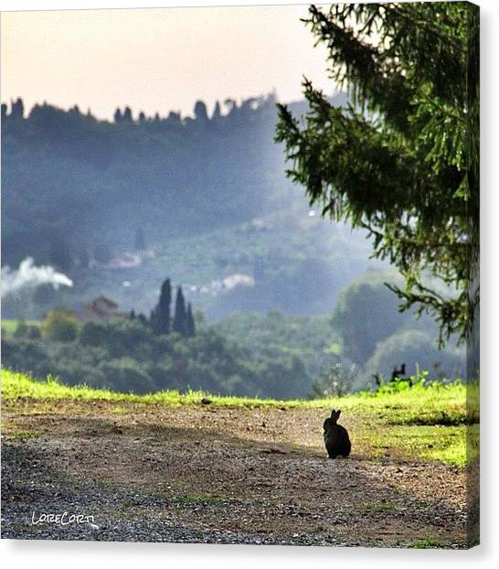 Rabbits Canvas Print - Enjoying The View by Lorenzo Corti