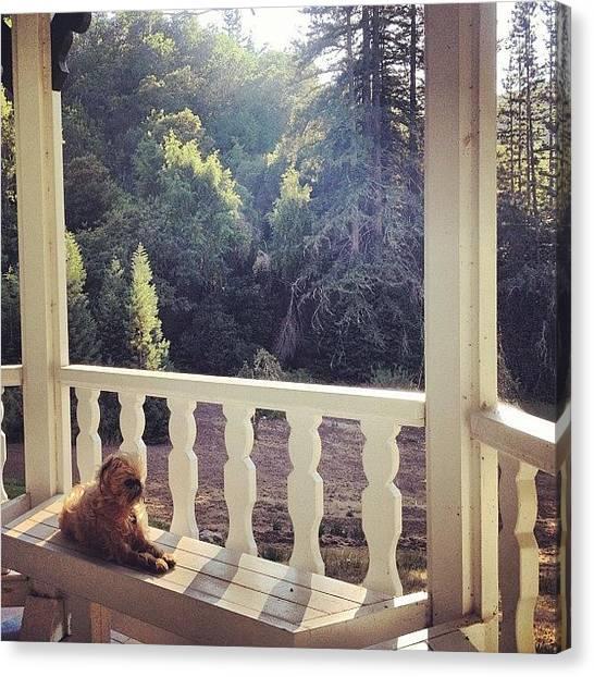 Redwood Forest Canvas Print - Enjoying The View. Ooooof. 💗 by Caitlin Schmitt