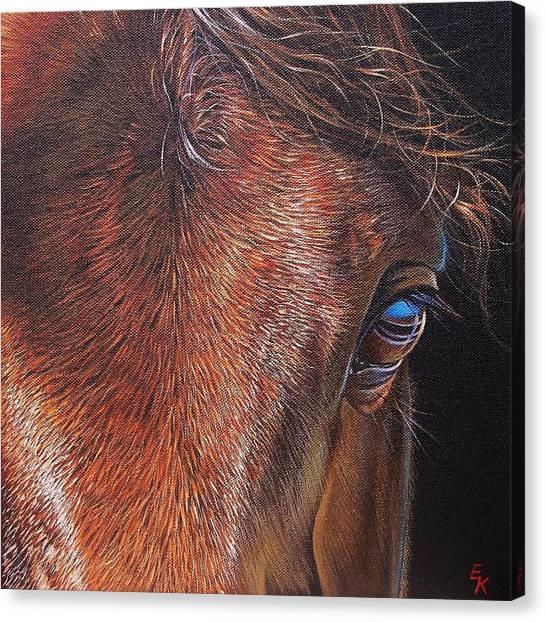 Equine 2 Canvas Print