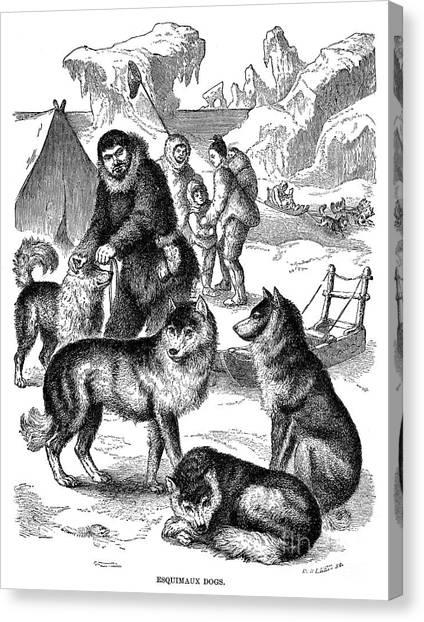 Sleds Canvas Print - Eskimo: Sled-dogs by Granger