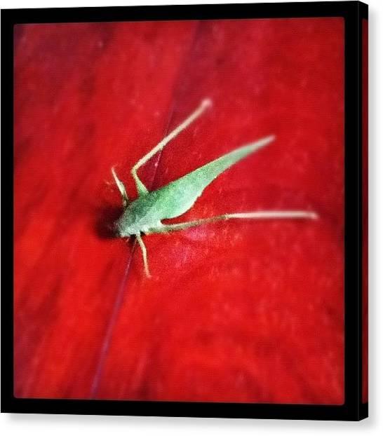 Grasshoppers Canvas Print - Esperanca by Rodrigo Bloise