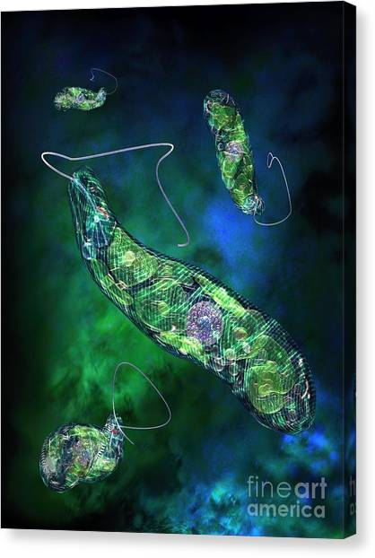 Euglena Blue Canvas Print