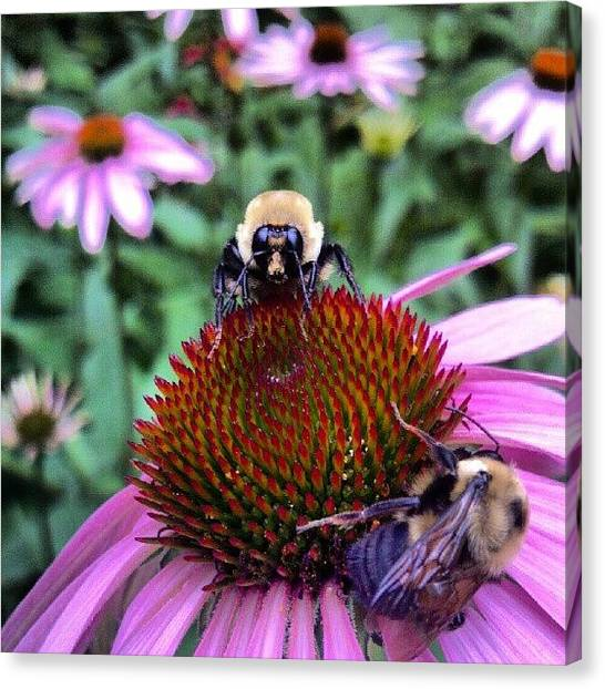 Droid Canvas Print - Even More #bees !  Another #beautiful by Carla From Central Va  Usa