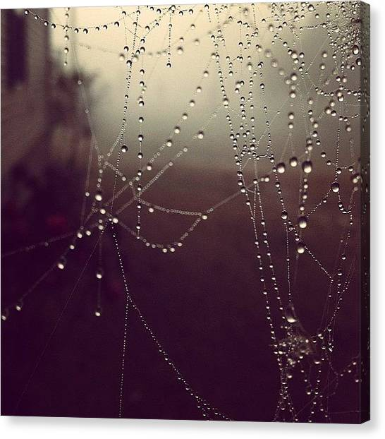 Spiders Canvas Print - Even The Tiny Spiders Couldn't Escape by Amber Flowers