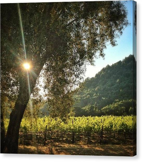 Vineyard Canvas Print - Evening #bicycle Ride Through The by Peter Stetson