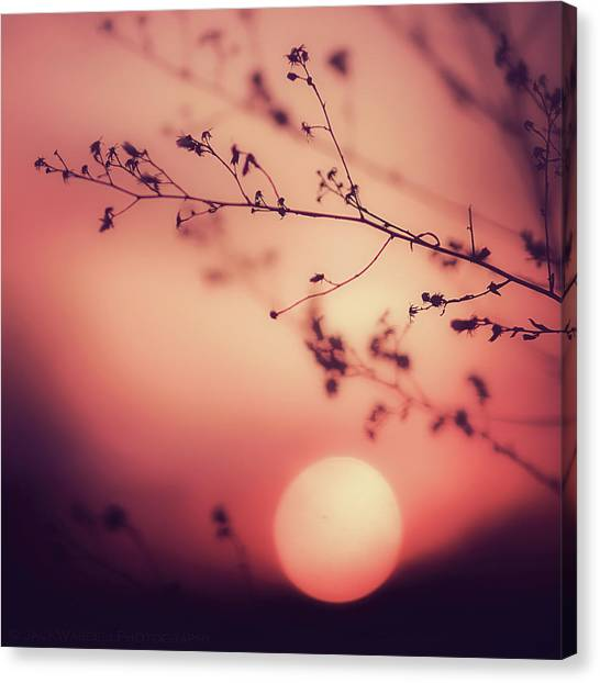 Evening Delight Canvas Print by Jack Wassell Photography