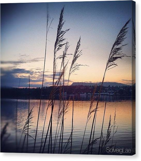 Seagrass Canvas Print - Evening Walk By The Shore. G'night by Solveig Lae