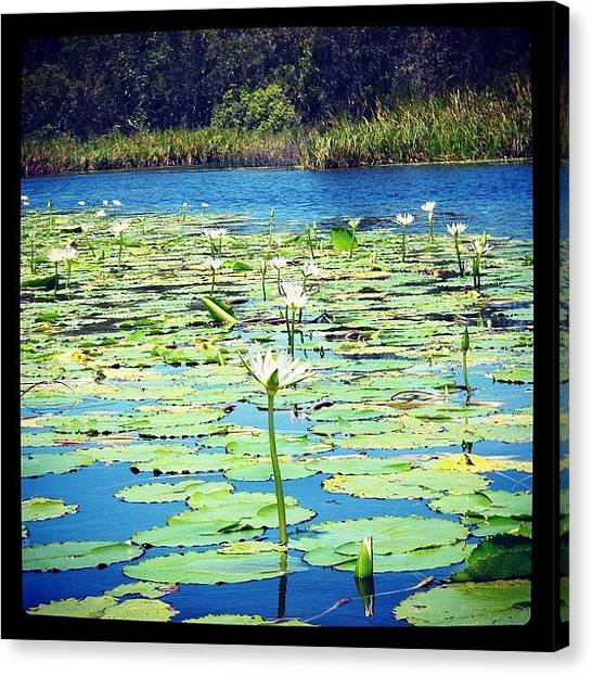 Everglades Canvas Print - #everglades #uppernoosariver #cooloola by Tony Keim