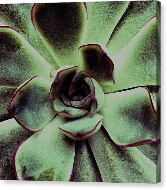 Irises Canvas Print - Exciter by Francesca Sara