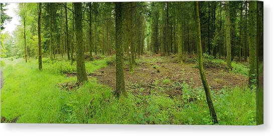 Exmoor Forest Canvas Print