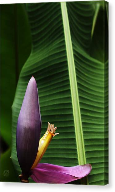Exploring Light In Nature Canvas Print