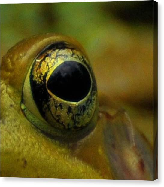 Newts Canvas Print - Eye Of Frog by Paul Ward