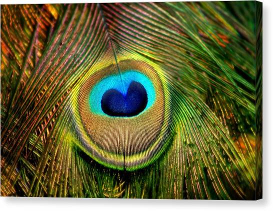 Eye Of The Peacock Feather Canvas Print