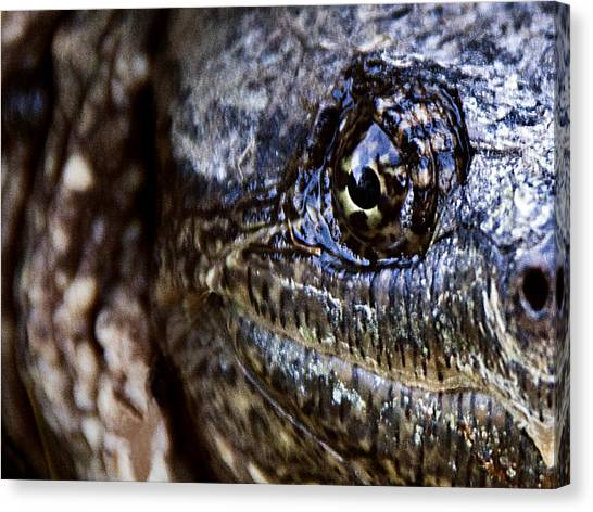 Snapping Turtles Canvas Print - Eye On You by George Hausler