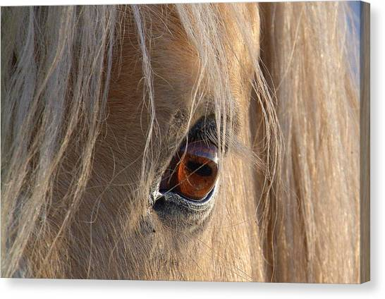 Eyes Of Beauty.. Canvas Print by Al  Swasey