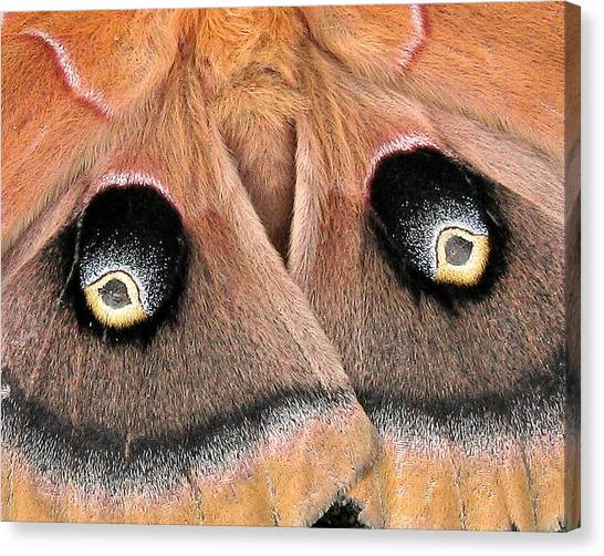 Eyes Of Deception Canvas Print
