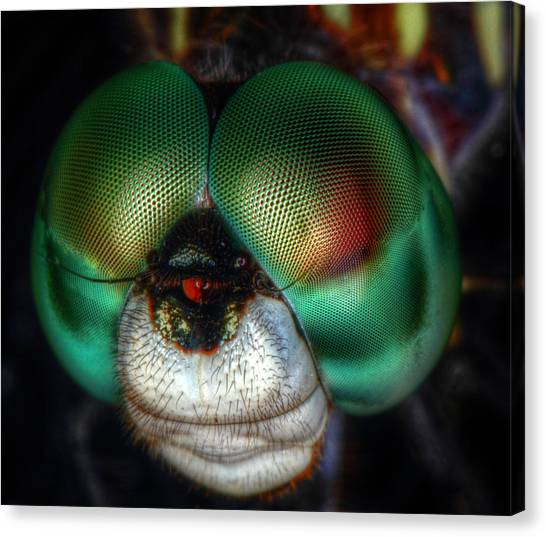 Eyes Of The Dragon Canvas Print