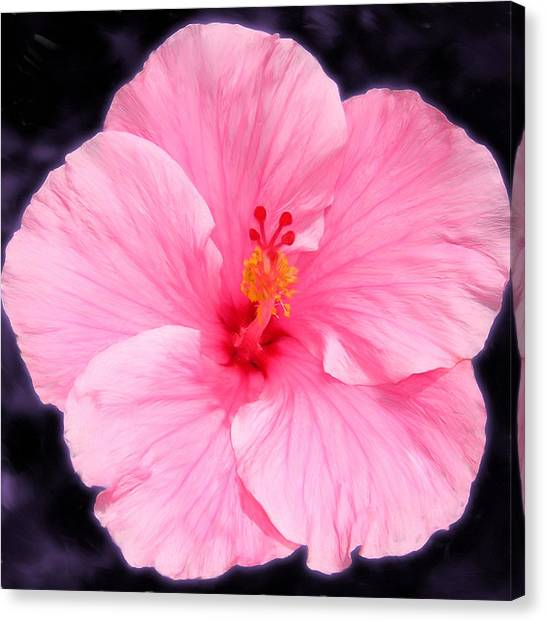 Face Hibiscus Canvas Print by Marcos Porcayo