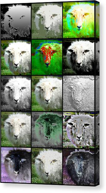 Facets Of Innocence Canvas Print