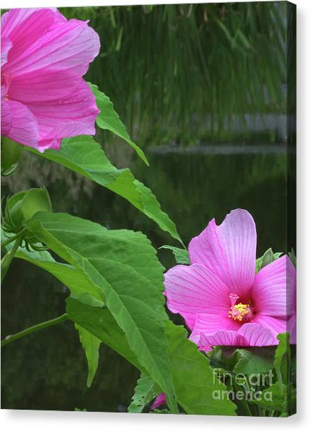 Facing The Pond Canvas Print