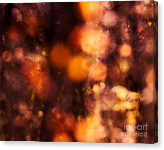 Fading Fall Flame Canvas Print by Royce Howland